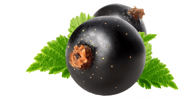 CurraNZ - New Zealand Blackcurrant Supplement | product-specification-image